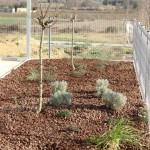 Plantations : amandier aromatiques